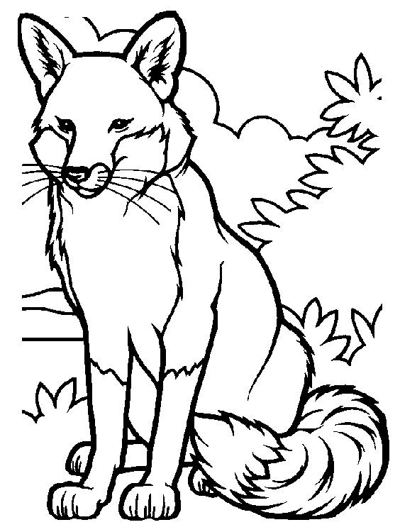Fox Coloring Pages Coloringpages1001 Com Fox Coloring Page