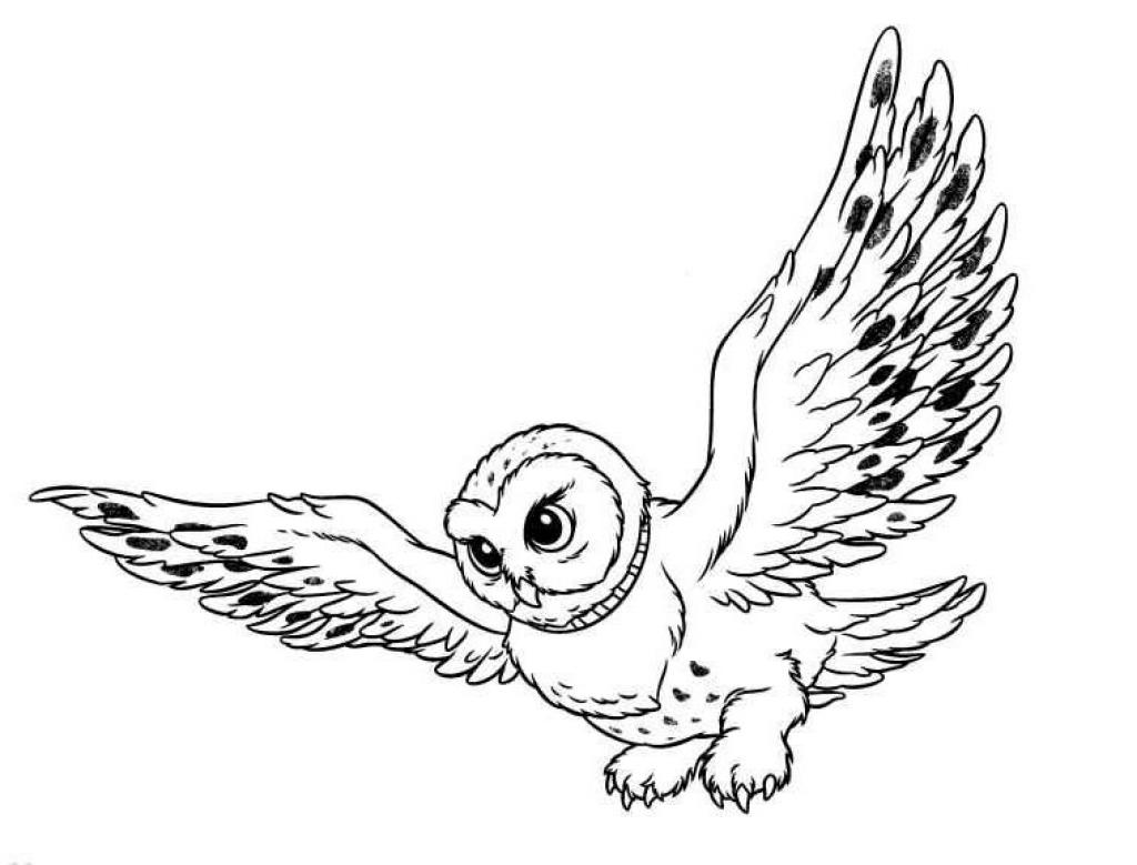 a owl coloring pages - photo #30