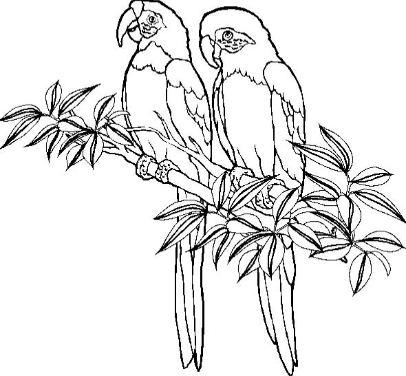printable coloring pages parrots - photo#25