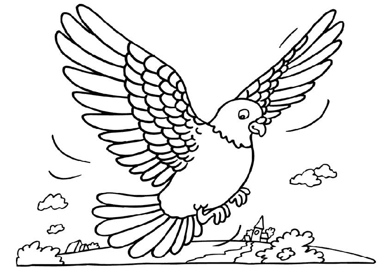 coloring pages pigeon - photo#3